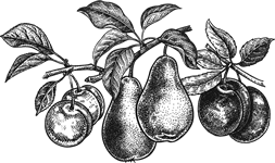 fruit-icon-all